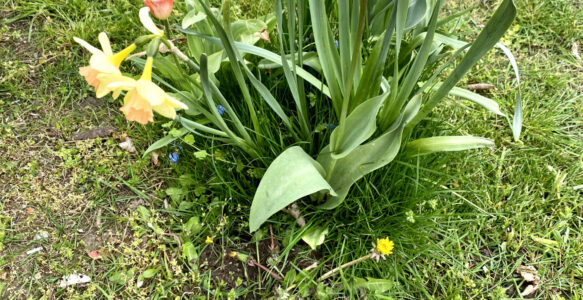 Hortkinder pflanzen 200 Blumen